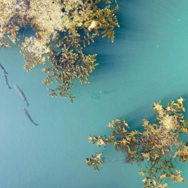 urbex-drone-dji-mavic-air-exploration-poisson-rhone